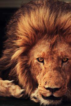 Face the king || Andreas Jansrud