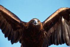 Qué significan las plumas para los Cherokee | eHow en Español