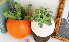 Pumpkin Succulent Planters are the Perfect Halloween DIY
