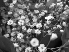 Baby's Breath in Black & White by Colleen Winter My Flower, Flowers, Baby's Breath, Flower Pictures, Dandelion, Black And White, Winter, Plants, Winter Time