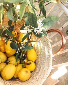 lemon I citrom Mediterranean Garden, Summer Aesthetic, Nature Aesthetic, Lemon Lime, Lemon Grass, Mellow Yellow, Summer Time, Flora, Instagram