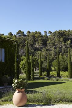 72357a50d68 I m considering the vertical accents of Cupressus simpervirens   Pyramidalis  for the garden.