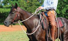 Turn Signals: Teaching Neck Reining with Ed Dabney | EquiSearch