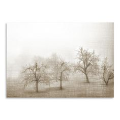 Found it at Wayfair.ca - Haze in Champagne I by Golie Miamee Photographic Print