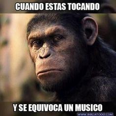 Los músicos entenderán esto… Planet Of The Apes, Humor, Animals, Piano, Christian Memes, Musica, Christian Pictures, Hilarious Pictures, Funny Memes