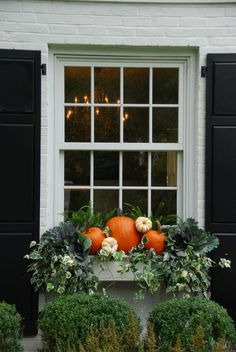 Gardening Autumn - The Ultimate Fall Decorating Guide: 30 Ideas to Try This Weekend - With the arrival of rains and falling temperatures autumn is a perfect opportunity to make new plantations Fall Window Boxes, Window Box Flowers, Fall Flower Boxes, Window Planter Boxes, Window Box Plants, Christmas Window Boxes, Autumn Flowers, Fruit Flowers, Autumn Decorating