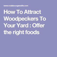 How To Attract Woodpeckers To Your Yard : Offer the right foods