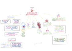 Mappa scienze:Apparato respiratorio
