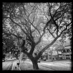 #tramas_urbanas uma questão de escala / a matter of scale  #trees #hipstamatic #hipstaconnect #hipstafashion #morumbi #natasha #dogs #claunch72monochrome #kattiamodelolinda