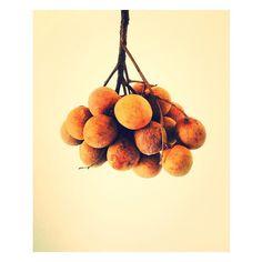 Longani Time #reunion #reunionisland #réunionisland #iledelareunion #gotoreunion #974 #974island #team974 #island #islander #longani#fruit#exotic#tropical#tropic#reunionparadis#foodporn#food#instadaily #lifestyle #instamiam #enjoy#photooftheday#picoftheday#picofday#pictureoftheday#brown#lareunion by lapetiteboudine