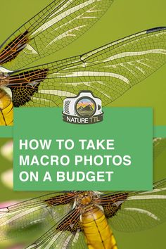 Learn how to take macro photos without breaking the bank. // cheap, affordable, budget, equipment, c Wildlife Photography Tips, Summer Nature Photography, Art Photography Portrait, Landscape Photography Tips, Photography Basics, Photography Lessons, Ocean Photography, Photography For Beginners, Photography Business