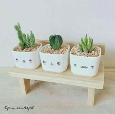 Cactus is a type of plant that is able to live in hot, dry and lacking water conditions. The original cactus habitat is in the desert, which requires the cactus to adapt to its environment in order…