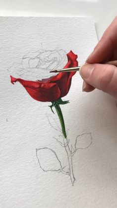 American artist specializing in watercolor and oil painting. Watercolor Art Lessons, Watercolor Paintings, Watercolors, Art Drawings Sketches Simple, Diy Canvas Art, Watercolor Flowers, Flower Art, Stay Tuned, Painting Tips