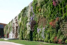 A shopping center in the Italian town of Rozanno has recently claimed a rather unusual Guinness record, for the world's biggest vertical garden. Growing on the walls of the commercial complex, the unique garden covers an area of 1,263 square meters and is made up of about 44,000 plants.