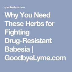 Why You Need These Herbs for Fighting Drug-Resistant Babesia   GoodbyeLyme.com