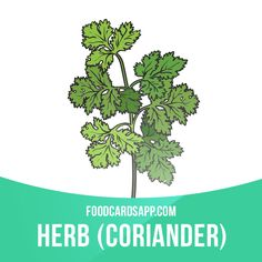 Coriander contains phytochemicals that can delay spoilage of food.  #herb #herbs #coriander #food #english #englishlanguage #learnenglish #studyenglish #language #vocabulary #dictionary #englishlearning