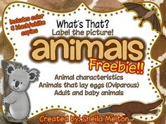 """I hope you enjoy this FREEBIE! Kids love animals and they especially love labeling pictures with animals! Includes color and black/white copies! Be sure to check out the entire unit of """"What's That? Label the Picture!"""" with animals. This unit features animal characteristics, animals that lay eggs (oviparous) and adult and baby animals. 30 slides in all!!"""