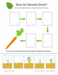 Second Grade Life Science Worksheets: Explore the Life Cycle of a Carrot Worksheet Preschool Garden, Fall Preschool, Kindergarten Science, Preschool Themes, Science Lessons, Science For Kids, Science Activities, Life Science, Sequencing Activities