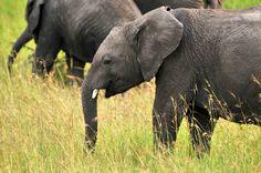 #elephants The Big Five in Kenya