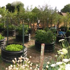 Using old tires and culverts is a great way to recycle. It is a way to have a raised-bed garden in a small space. Tires can be put wherever there is an empty space in your yard or flower bed.