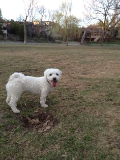 Daisy loves the dog park