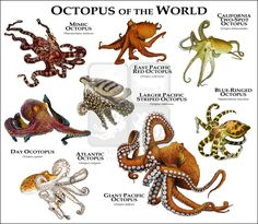 Octopus of the World...ROGER D HALL