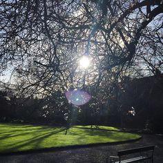 February sunshine