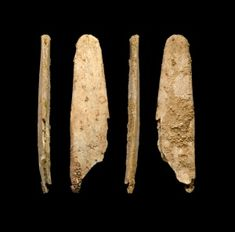 Neanderthals made leather-working tools like those in use today : Nature News & Comment