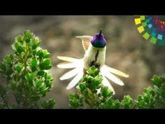 Ecuador Ama la vida - De los Andes a la Amazonia