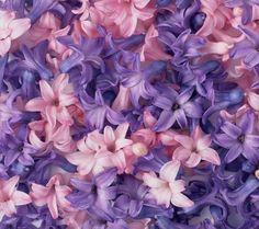 pink, purple, blue wedding bouquets | purple flower,purple,flower,pink flower,pink,flower,feature,microspur ...