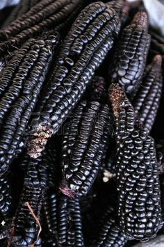 Black corn Stock Photo - 23689548