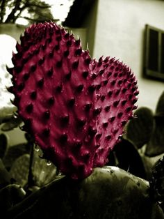 Heart...the prickly sort!