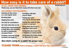 GHRS is a non-profit domestic rabbit rescue in Marietta, Georgia. Raising Rabbits, Bunny Care, Pet Care, Animal Care, Rabbit Hole, Random Things, Bunnies, Posters, Pets