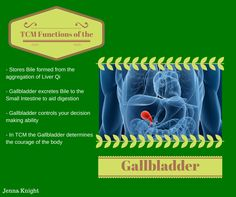 TCM functions of the Gallbladder