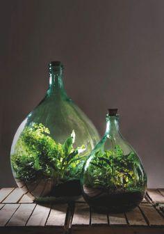 15 Litre Green Glass Terrarium With Terrarium Charcoal 15 Litre Green Glass Terrarium With Terrarium Charcoal Closed Terrarium Plants, Buy Terrarium, Bottle Terrarium, Moss Terrarium, Bottle Garden, Bottle Plant, Bottle Bottle, Plants In Bottles, Glass Bottles With Corks