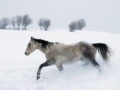 Un cheval au trot dans la neige