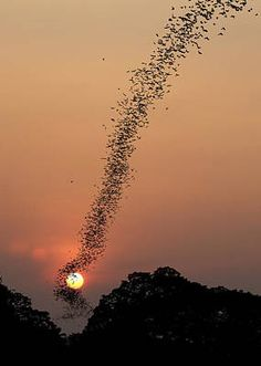 Trademark Global Jean De Spiegeleer 'Bat Swarm At Sunset' Canvas Art - 35 x 2 x 47 Cool Pictures, Cool Photos, Beautiful Pictures, Inspiring Pictures, Amazing Photos, Funny Pictures, All Nature, Amazing Nature, Beautiful Sunset