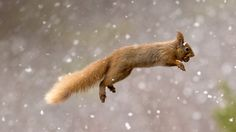 squirrel with nut photo on bing | Country: United States United Kingdom Deutsch Canada Australia France ...