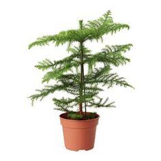 Plants, Pots & Gardening Tools - IKEA