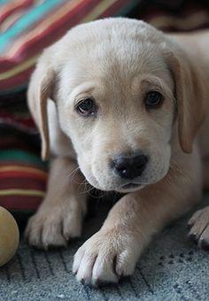 Sweet Puppy Dog Eyes  www.dirten.com