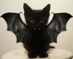 Do you dress up your pets for Halloween? We love some of these adorable pet costumes!
