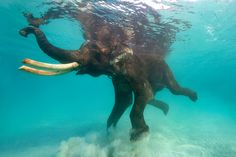 I must find a spot somewhere in my house for a swimming elephant photo