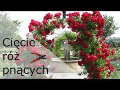 Christmas Wreaths, Holiday Decor, Plants, Gardening, Youtube, Mediterranean Sea, Balcony, Christmas Swags, Holiday Burlap Wreath
