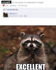 This simultaneously makes me LOL and scares me to freaking death. I don't think I can sleep. Raccoons are gonna' eat me.