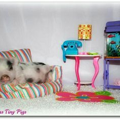 this is so me spoiling my pig Tiny Pigs, Small Pigs, Pet Pigs, This Little Piggy, Little Pigs, Animals And Pets, Cute Animals, Piggly Wiggly, Teacup Pigs