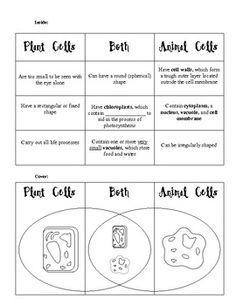 SOL Plant vs Animal Cell Foldable-replicate for low low level 7th Grade Science, Science Curriculum, Middle School Science, Science Lessons, Science Education, Science Activities, Science Resources, Education Major, Science Projects