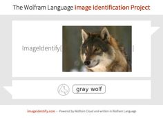 Artificial intelligence at work: automatic image identification by the Wolfram Language Artificial Intelligence, Wolf, Language, Clouds, Grey, Projects, Image, Gray, Log Projects