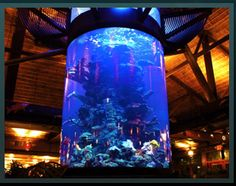 1000 images about aquariums fish tanks on pinterest for Pool show on animal planet