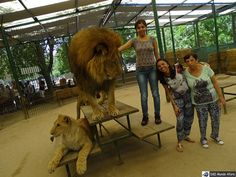 """Leão dando uma """"conferida"""" básica nas três medrosas ao lado!!!!! No Zoo Luján pertinho de Buenos Aires.  #mundoafora #dedmundoafora  #travel #viagem #tour #tur #trip #travelblogger #travelblog #braziliantravelblog #blogdeviagem #rbbviagem #instatravel #instagood  #blogueirorbbv  #blogueirosdeviagem #buenosaires #argentina #ap #zoologico #zoolujan #levaeu #missãoVT #lion #leao #queroviajarmais #revistaqualviagem #viagemeturismo #viagemestadao  @daytours4u @LevaEuTransfersPersonalizados…"""