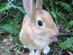 Mischievous Bunny Sticks Out Her Tongue at the Last Second - October 2, 2011